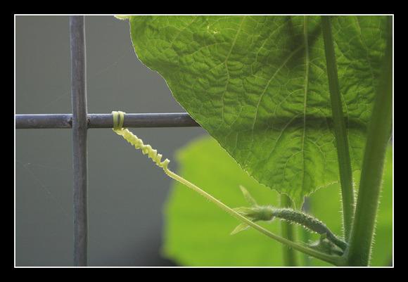 garden b12.jpg